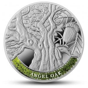 Nejstarší a nejpamátnější stromy světa - Nebeský dub