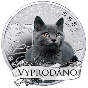 """Britská krátkosrstá kočka ze světově populární série """"Nejlepší přátelé člověka"""""""