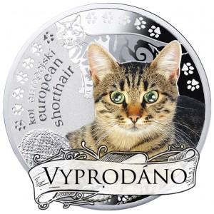 """Evropská krátkosrstá kočka ze světově populární série """"Nejlepší přátelé člověka"""""""