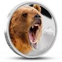 Medvěd Grizzly z populární série vládci kontinentů
