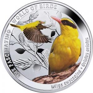 Žluva hajní - fascinující svět ptactva